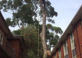 tree trimming north sydney