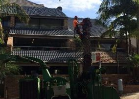 tree trimming lower north shore