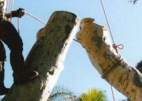 tree lopping north sydney