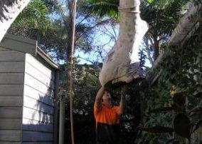 tree lopping upper north shore