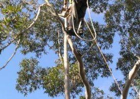 tree removal north sydney