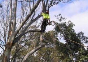 tree service north sydney