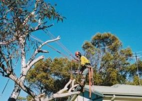 tree trimming northern beaches
