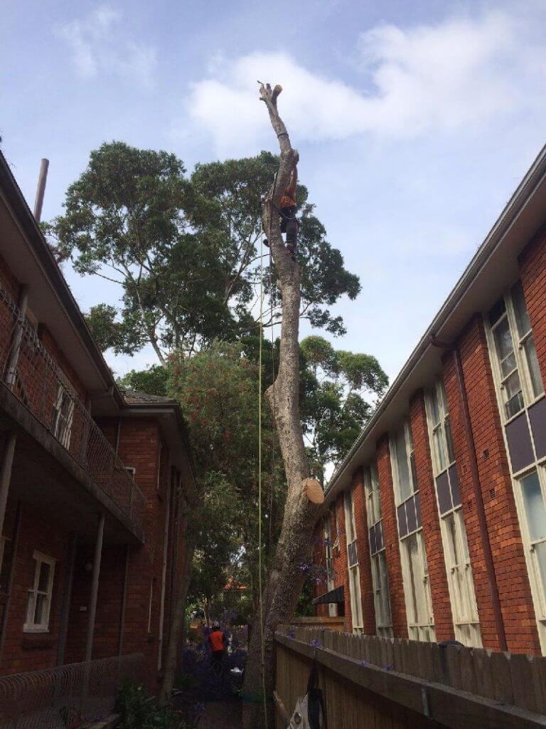 tree removal service north sydney