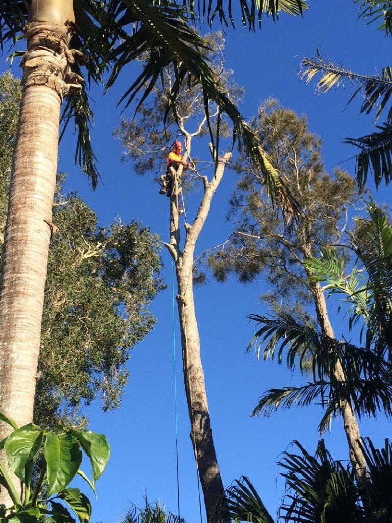 tree removal service upper north shore