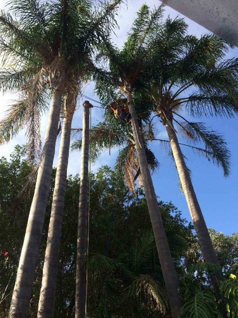 emergency tree removal northern beaches