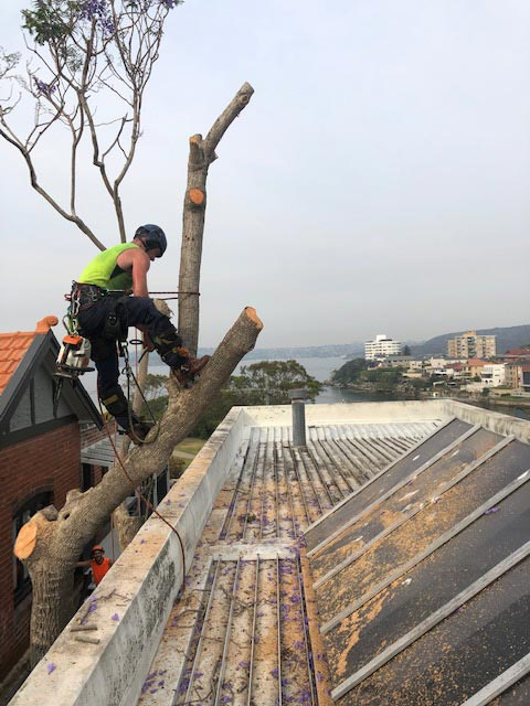 tree cutting services northern beaches