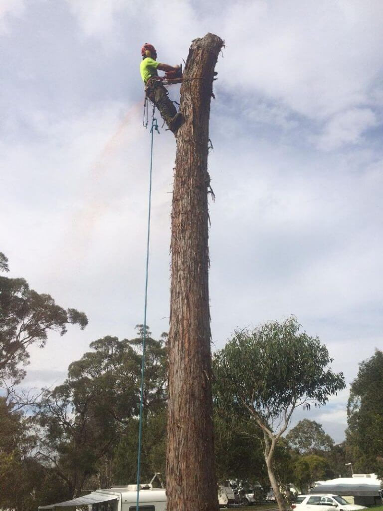 tree lopping northern beaches