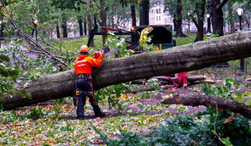 tree services northern beaches emergency removal