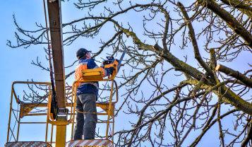 tree services northern beaches prunnig