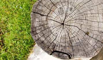 tree services northern beaches stump grinding