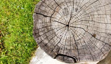 tree stump grinding northern beaches