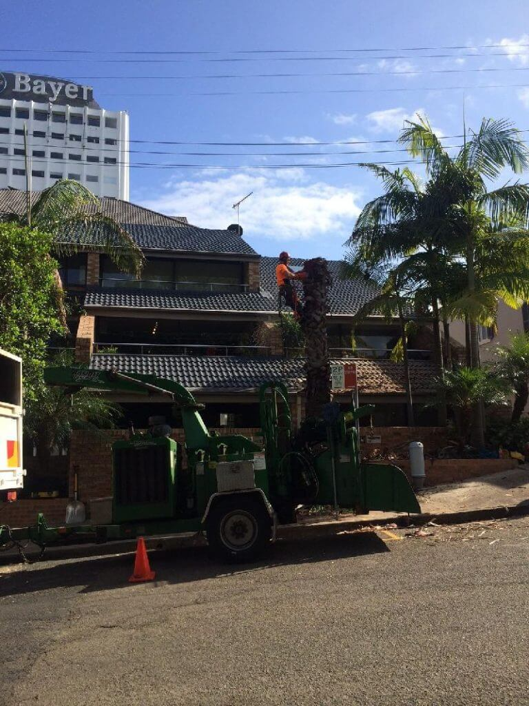 tree stump removal northern beaches